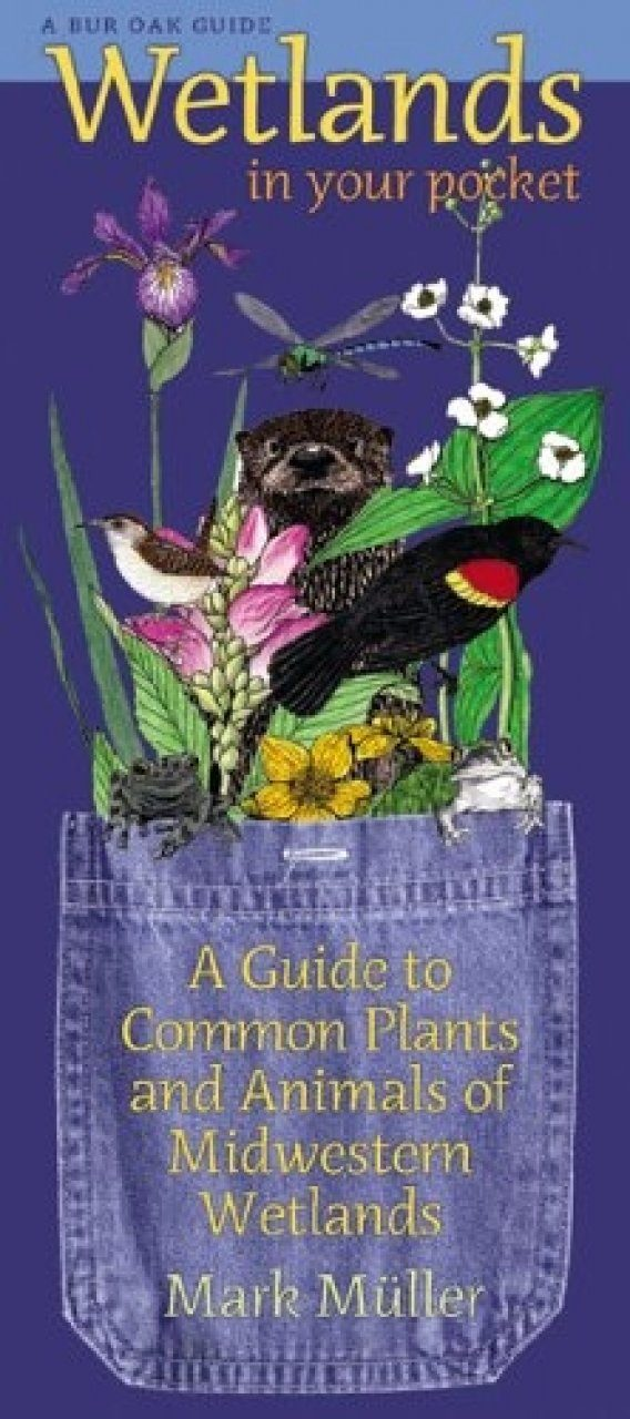 Prairie in Your Pocket A Guide to Plants of the Tallgrass Prairie