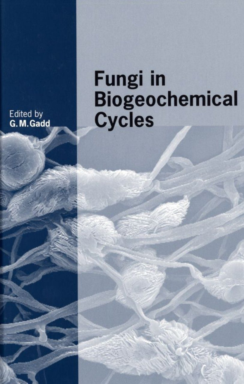 Fungi in Biogeochemical Cycles