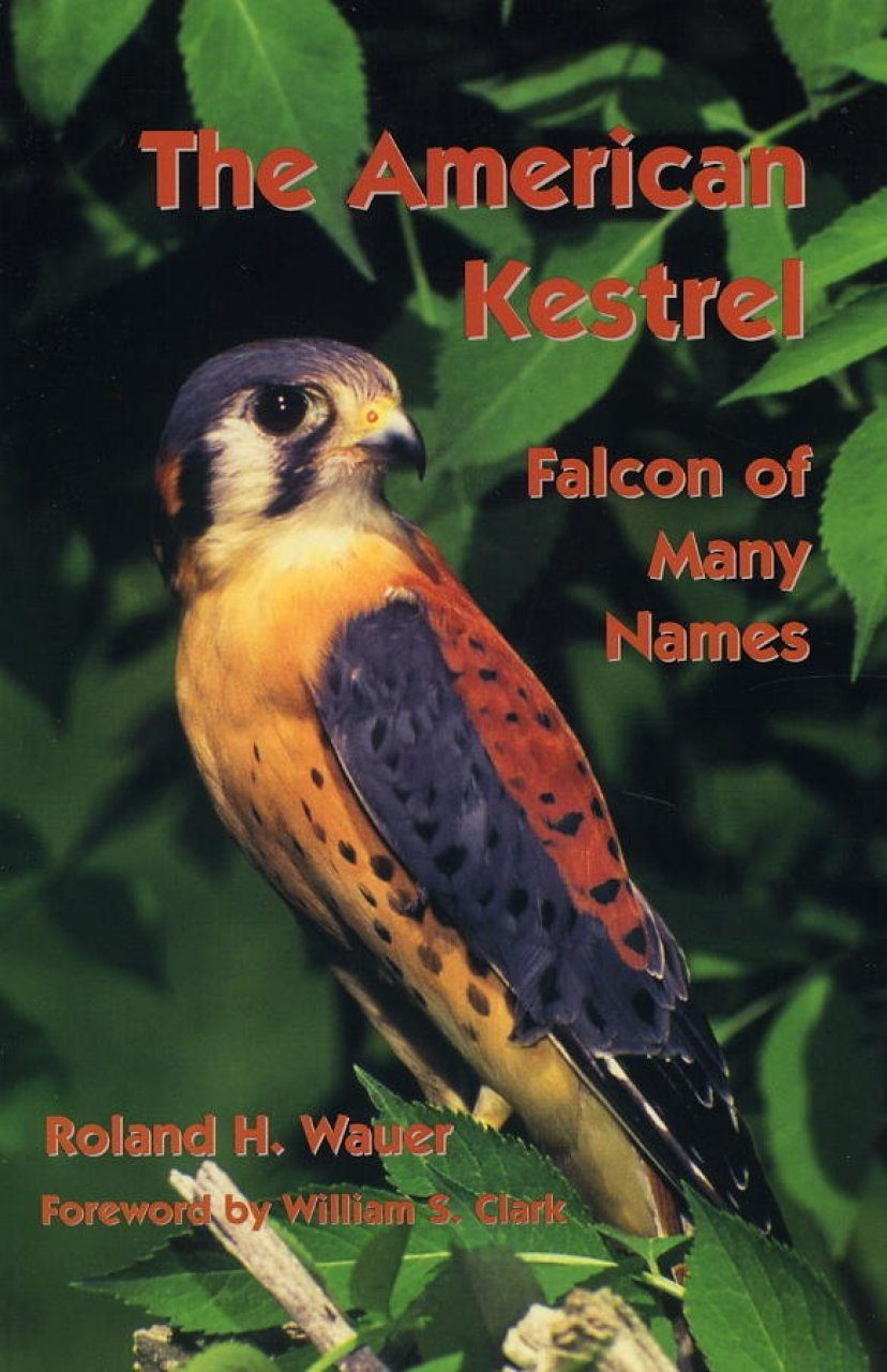 The American Kestrel