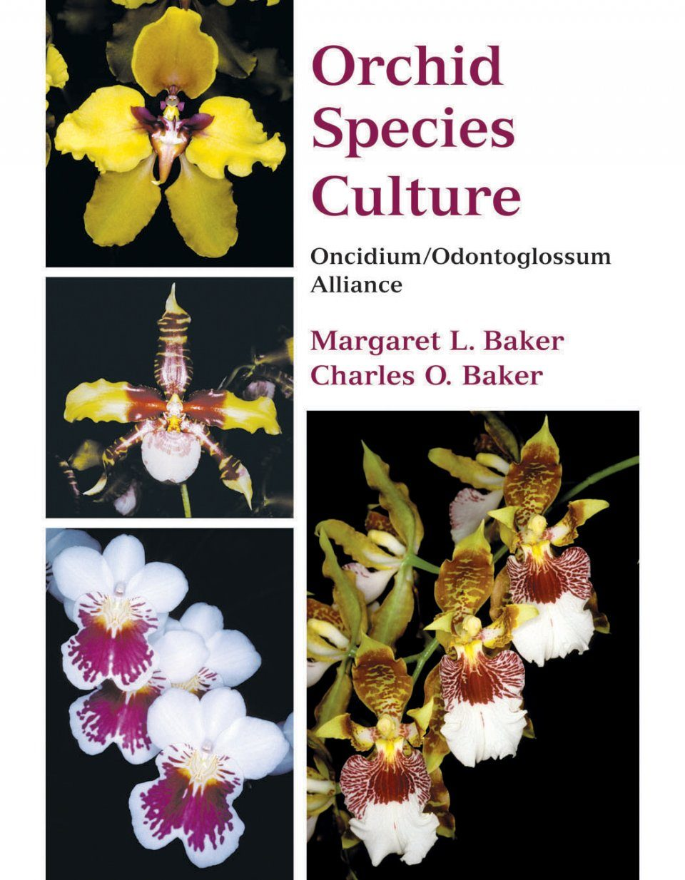 Orchid Species Culture: Oncidium/Odontoglossum Alliance