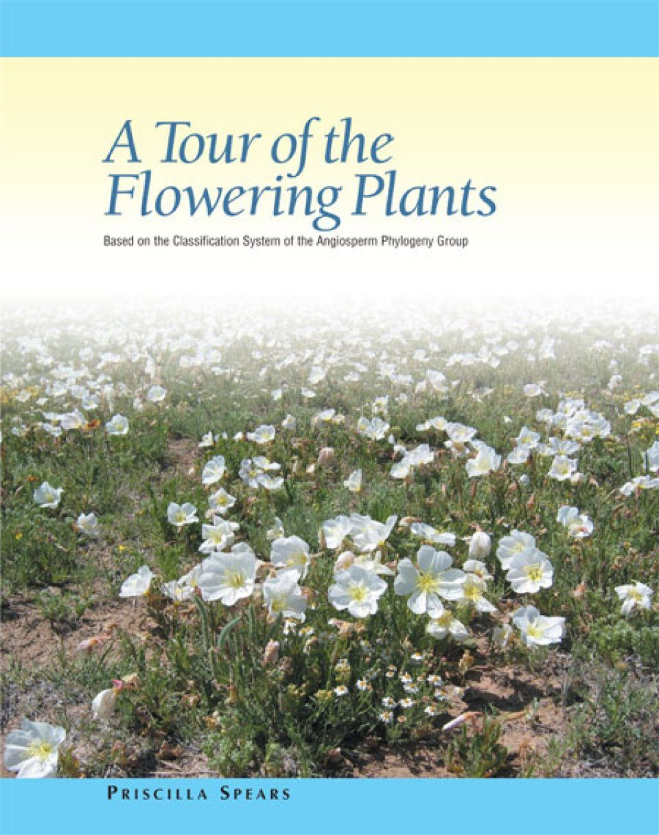 A Tour of the Flowering Plants
