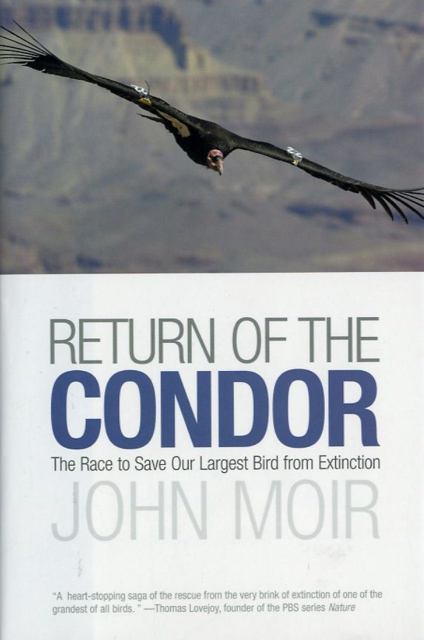Return of the Condor