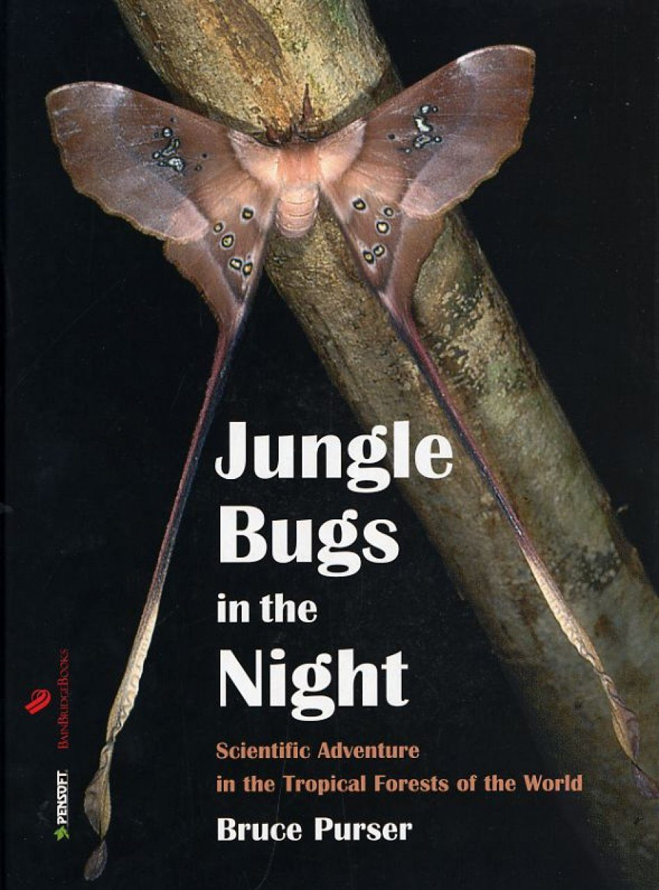 Jungle Bugs in the Night