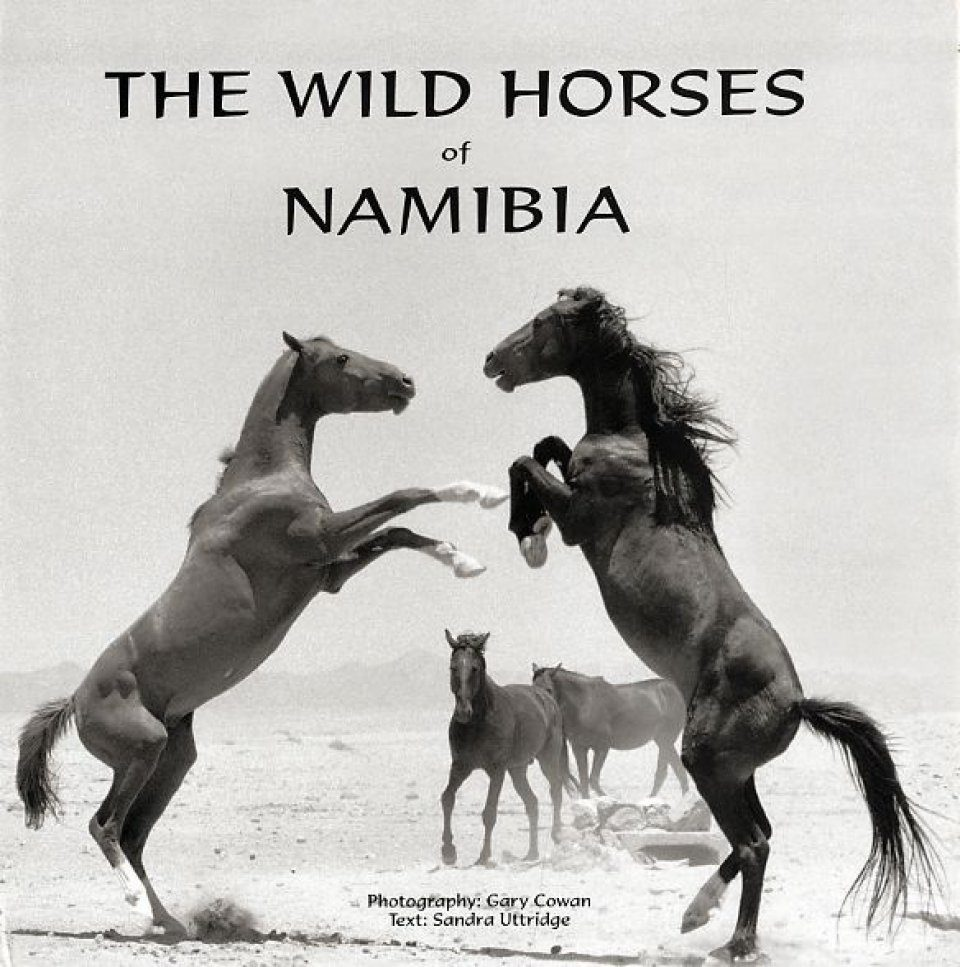 The Wild Horses of Namibia