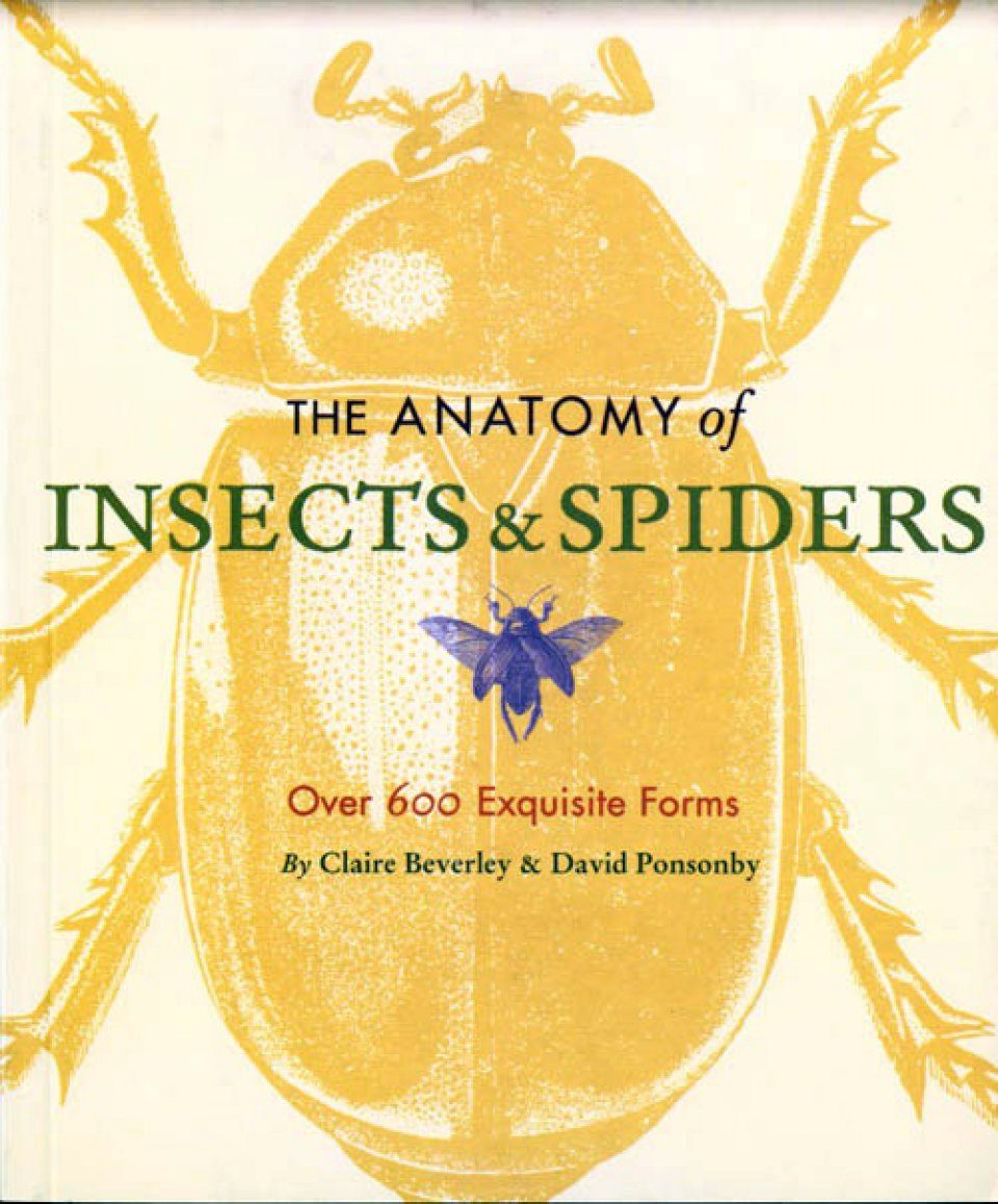 The Anatomy of Insects and Spiders: Over 600 Exquisite Forms: Claire ...