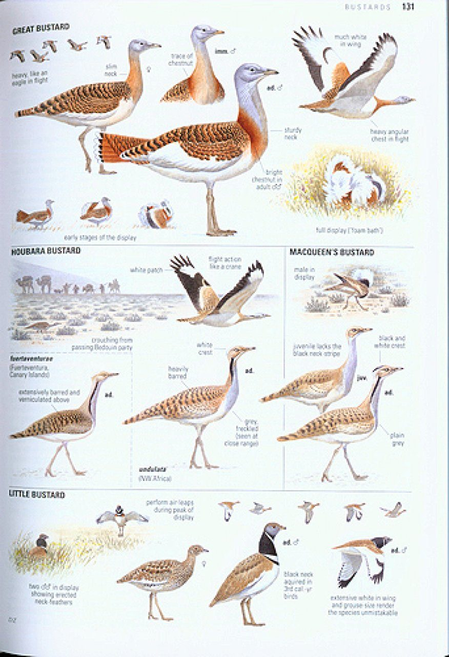 collins bird guide the most complete guide to the birds of britain rh nhbs com Bird Identification Chart Birds of North America Identification