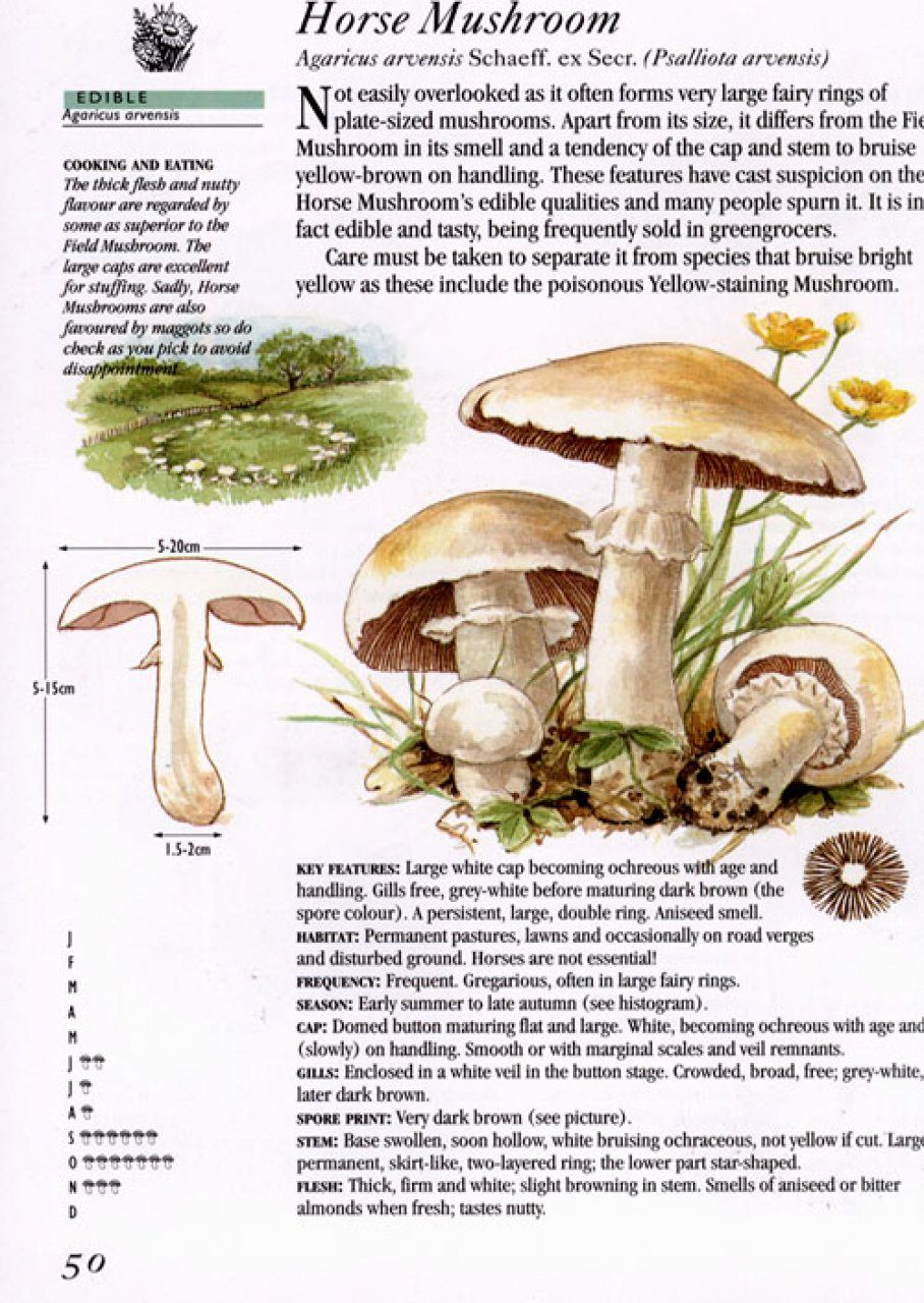 Craftsman Style Home Decorating Ideas: Collins How To Identify Edible Mushrooms