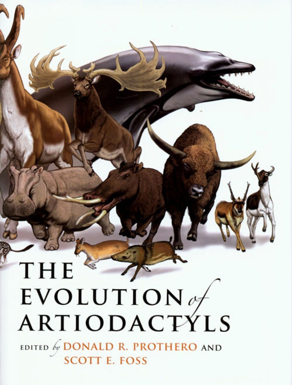 The Evolution of Artiodactyls