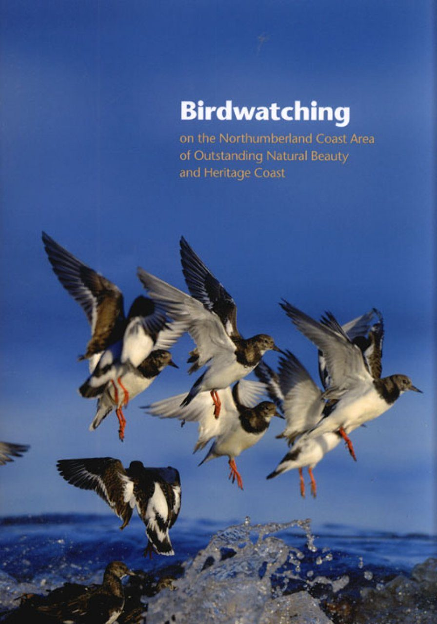 Birdwatching on the Northumberland Coast Area of Outstanding Natural Beauty and Heritage Coast