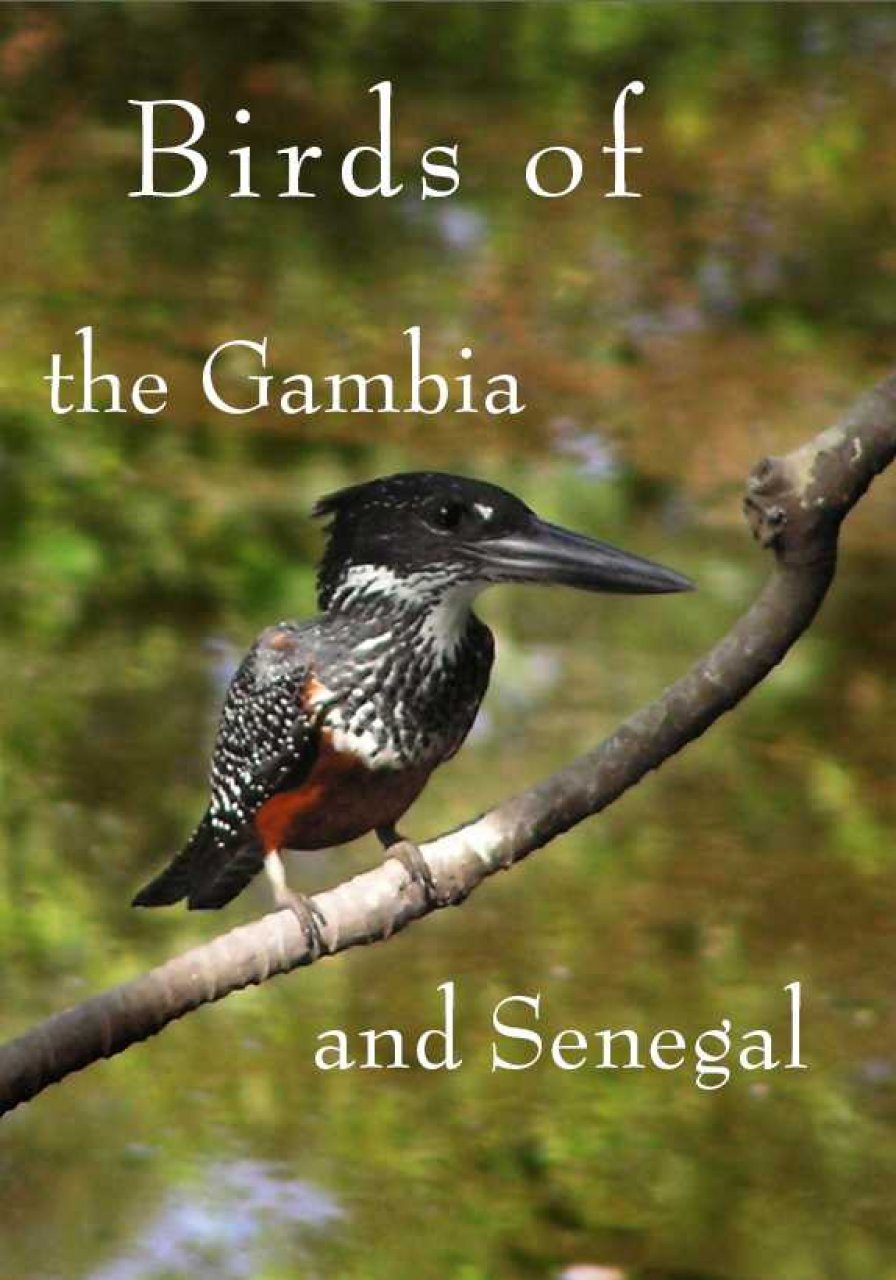 Birds of the Gambia and Senegal (All Regions)