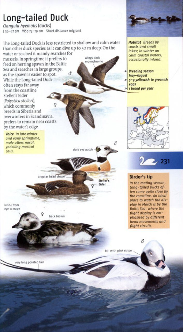 Birds Of Britain And Europe Volker Dierschke Nhbs Book Shop Animal Scarer Hobby Circuits Projects