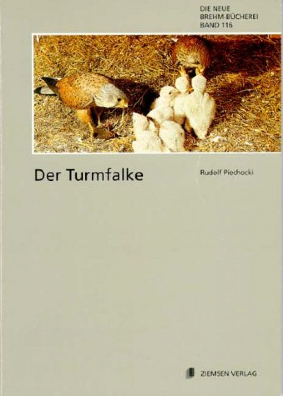 Der Turmfalke (Common Kestrel)
