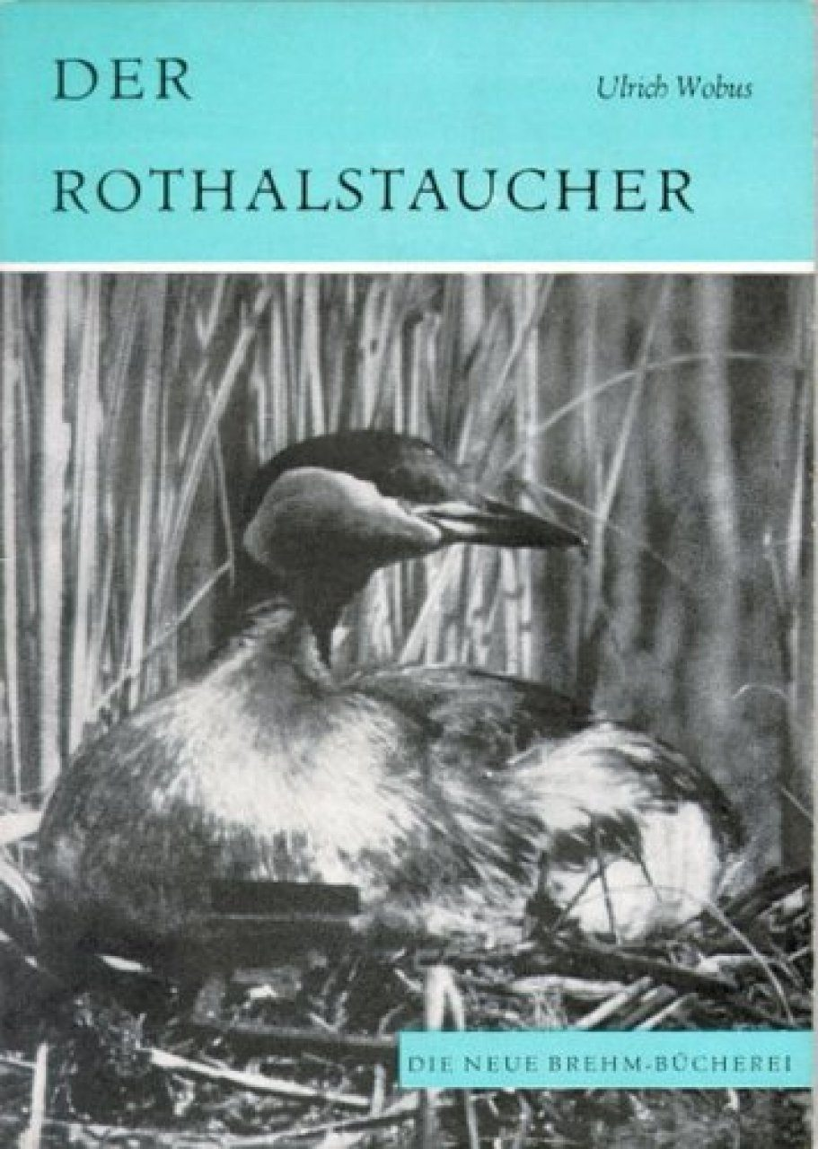 Der Rothalstaucher [Red-necked Grebe]