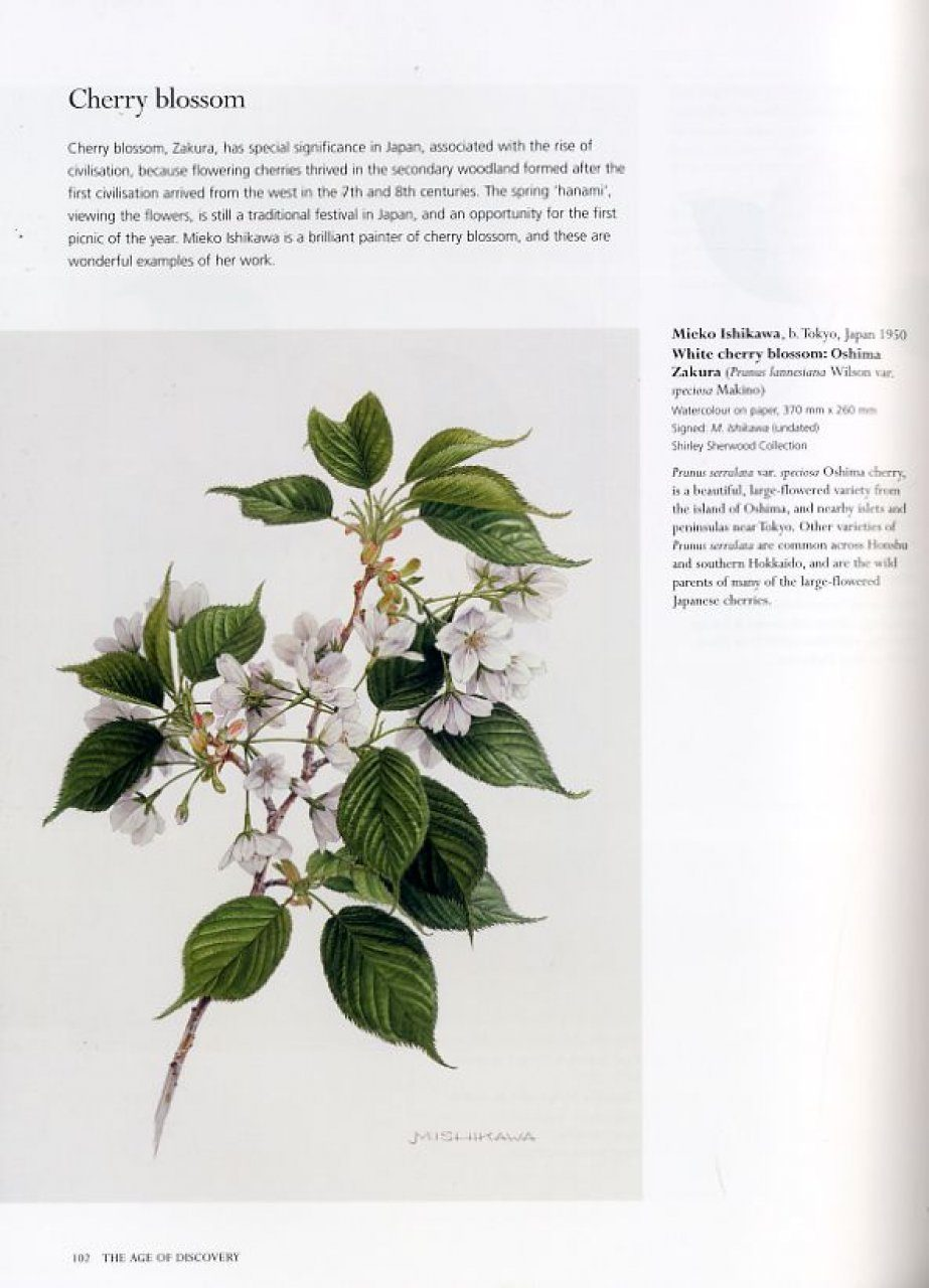 Treasures Of Botanical Art Icons From The Shirley Sherwood And