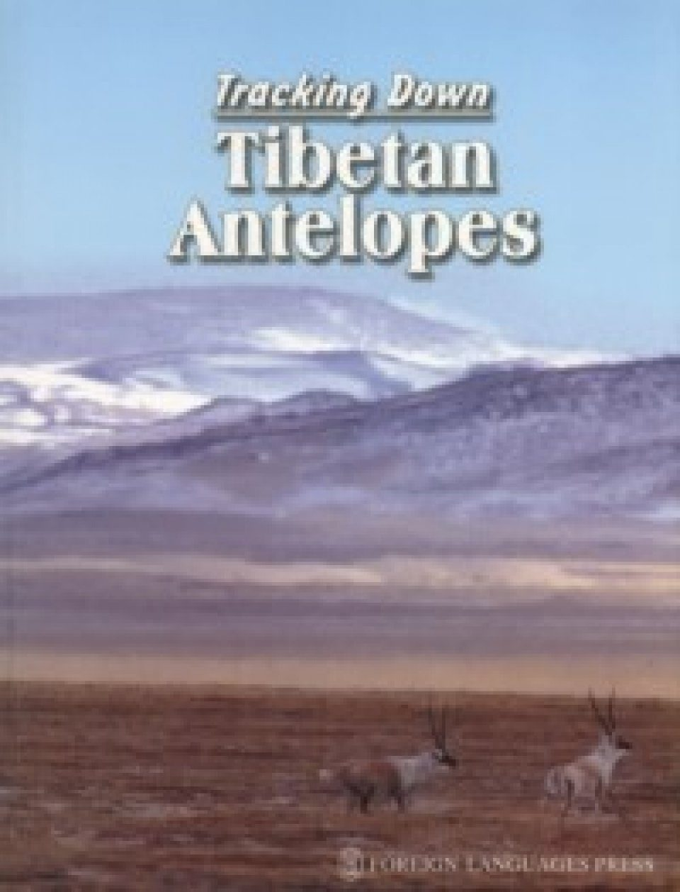 Tracking Down Tibetan Antelopes