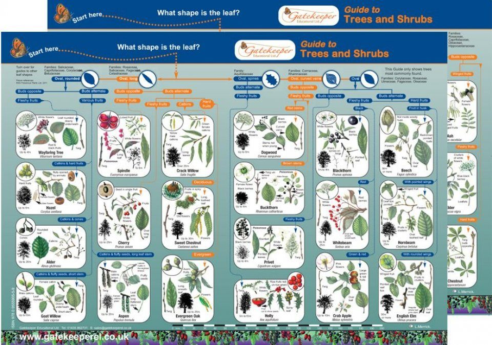 Guide to Trees and Shrubs
