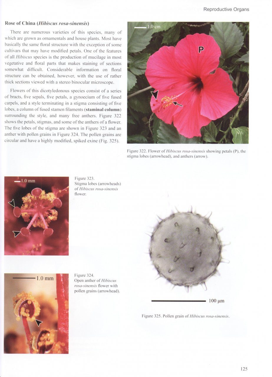Beautiful anatomy of hibiscus flower pictures flower ideas and teaching plant anatomy through creative laboratory exercises rl pooptronica Image collections