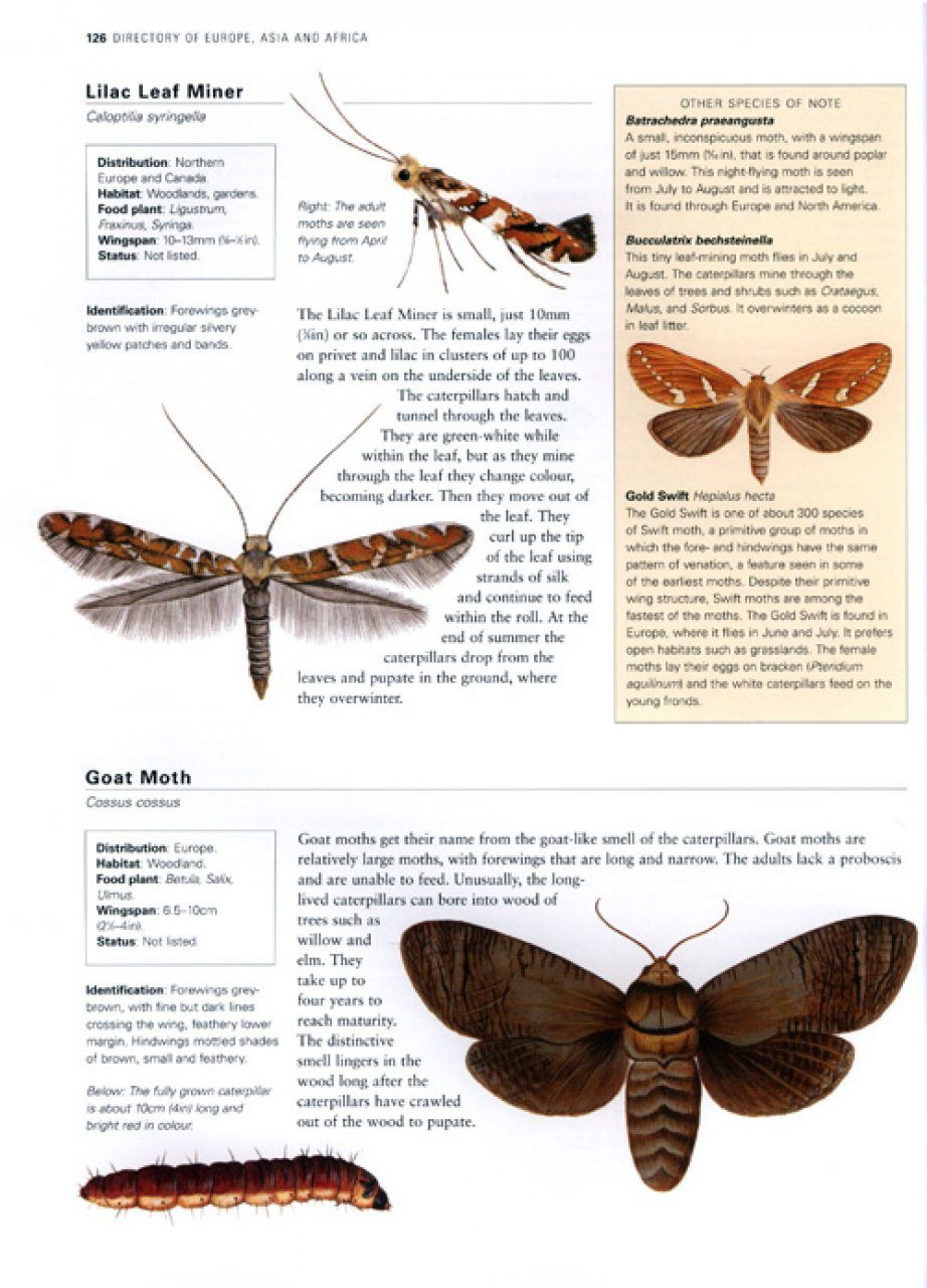 The Illustrated World Encyclopaedia of Butterflies and Moths | NHBS Field Guides & Natural History - photo#24