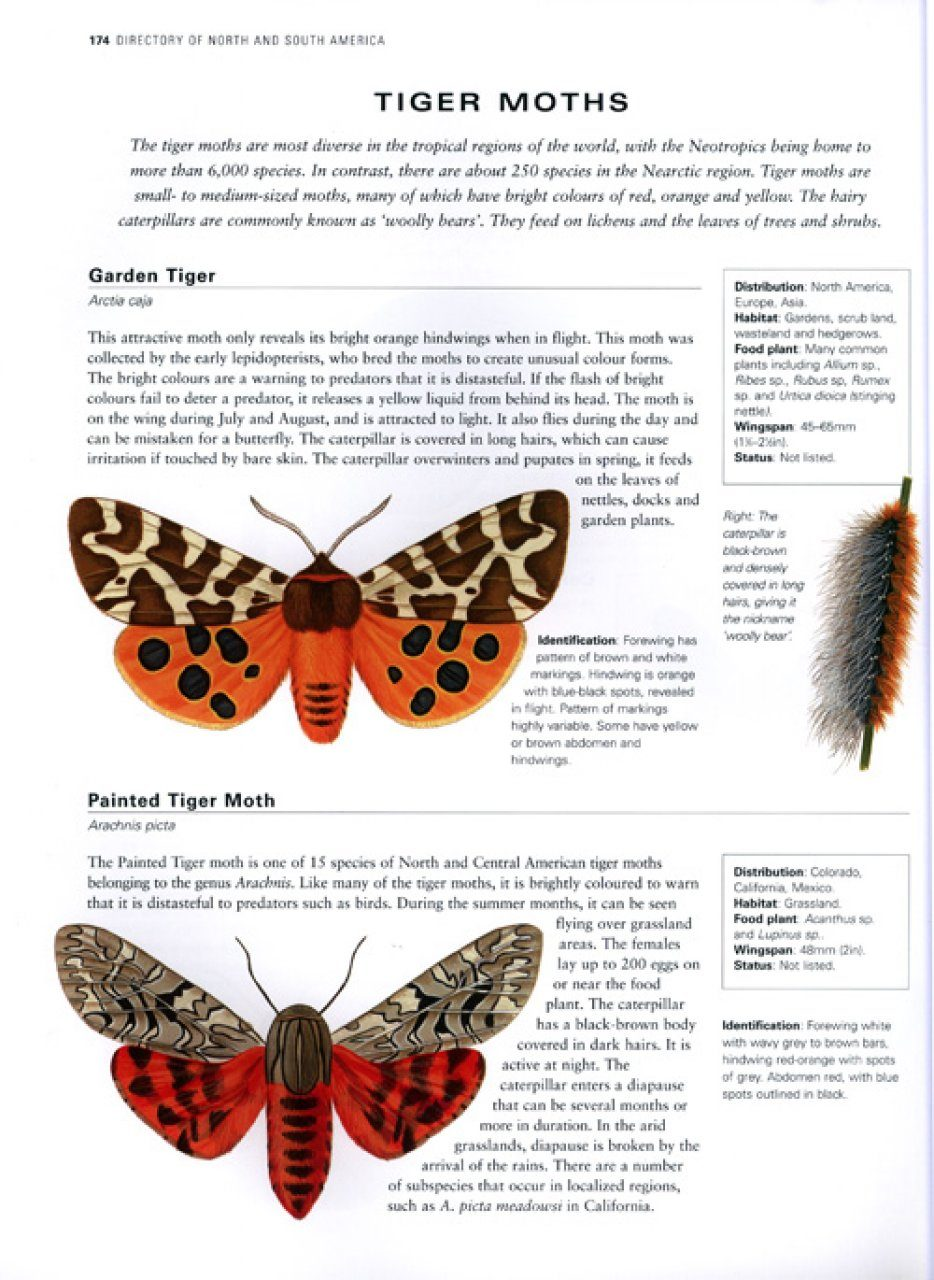 The Illustrated World Encyclopaedia of Butterflies and Moths | NHBS Field Guides & Natural History - photo#16
