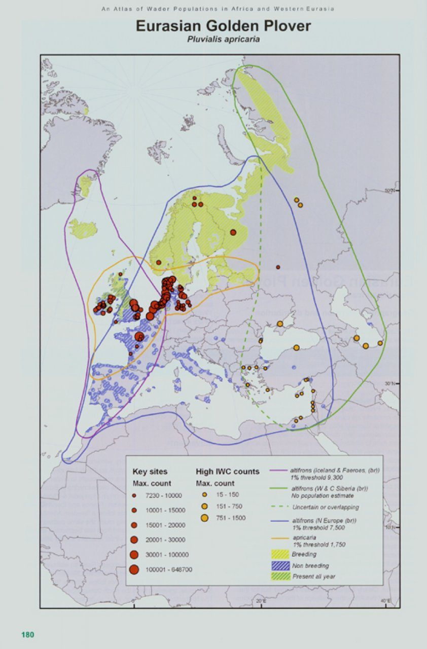 dd38eec961d4ec ... An Atlas of Wader Populations in Africa and Western Eurasia ...