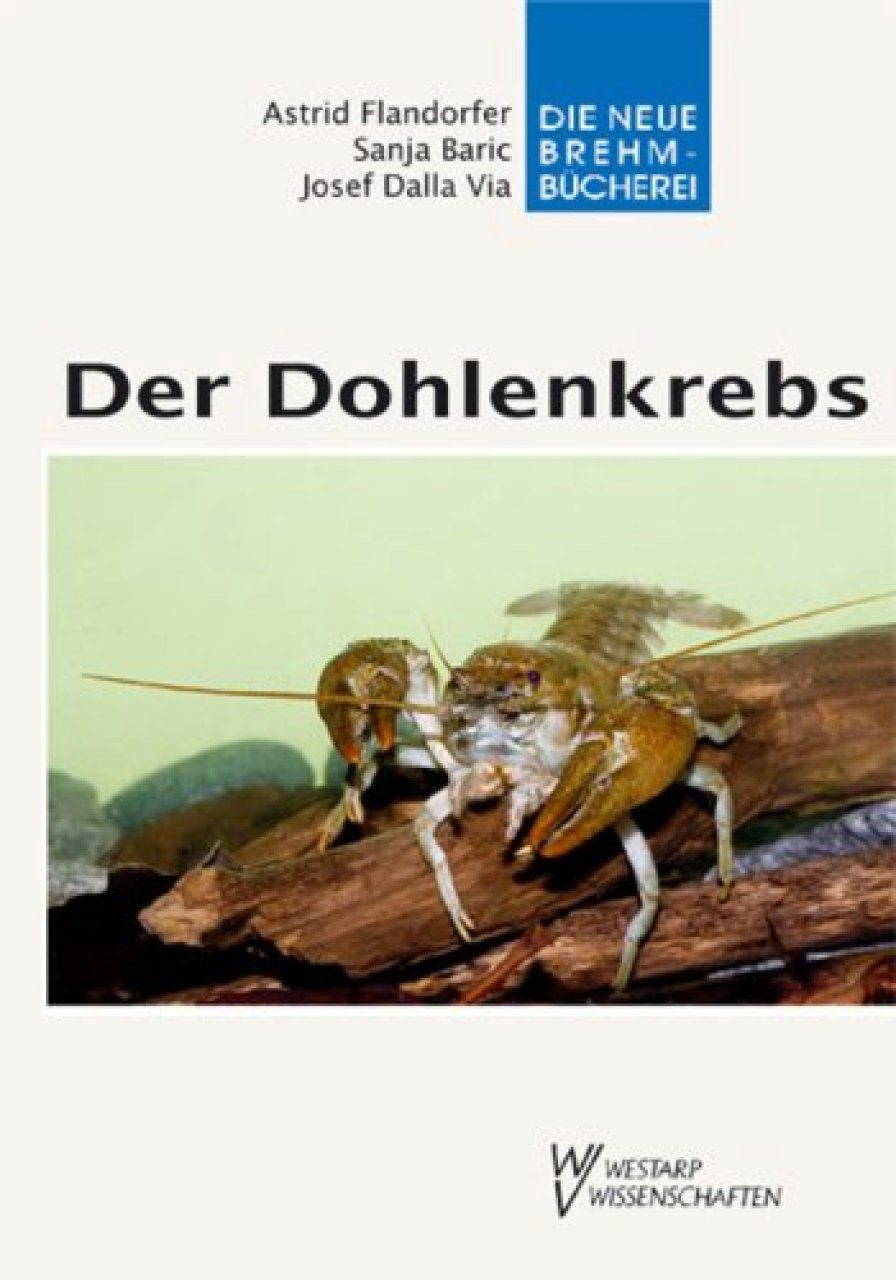 Der Dohlenkrebs (White-clawed Crayfish)