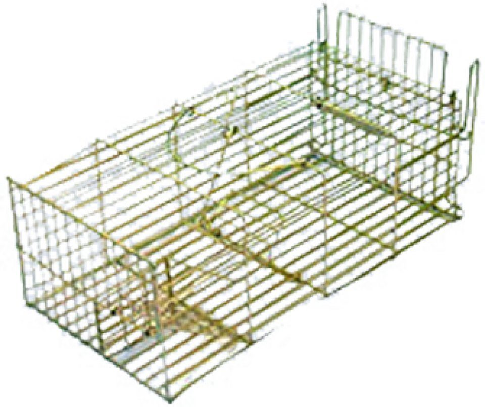Large Rat Trap