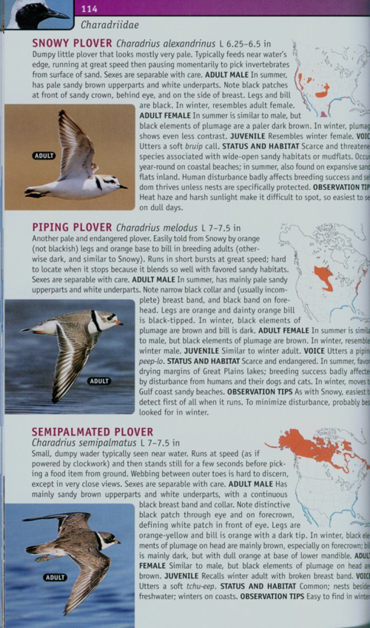 guide to field identification birds of north america
