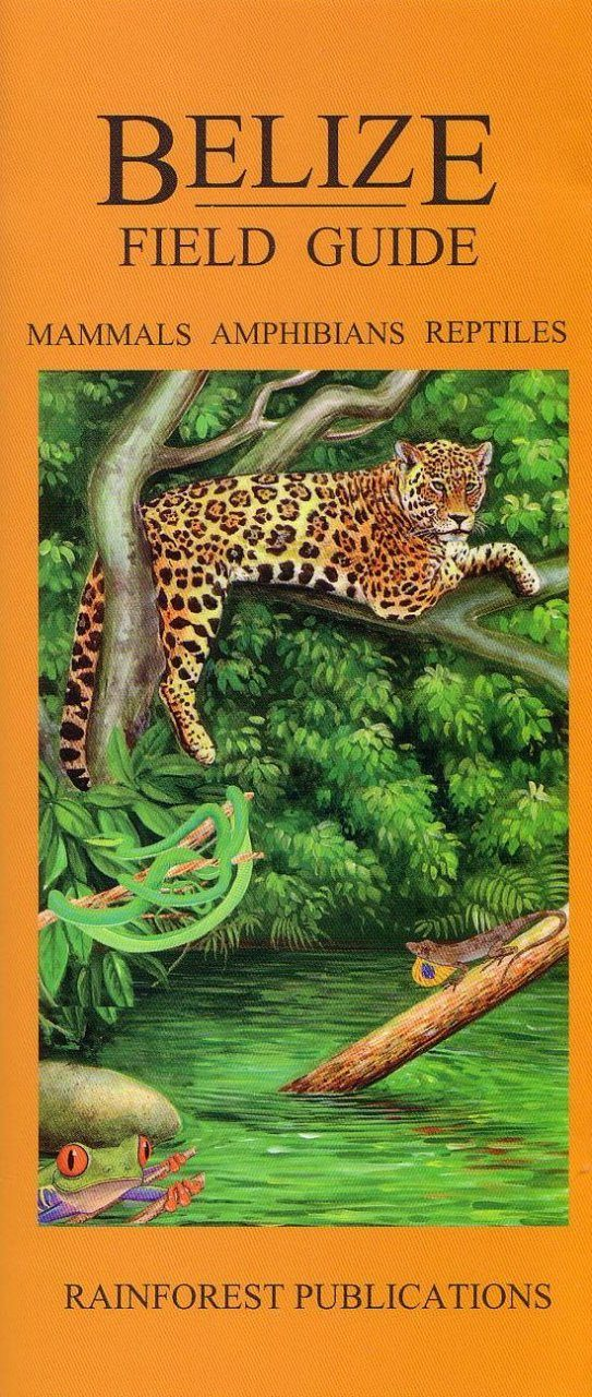 Belize Field Guide: Mammals, Amphibians and Reptiles [English / Spanish]