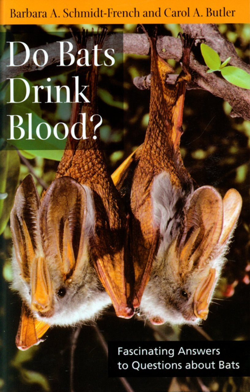 Do Bats Drink Blood?