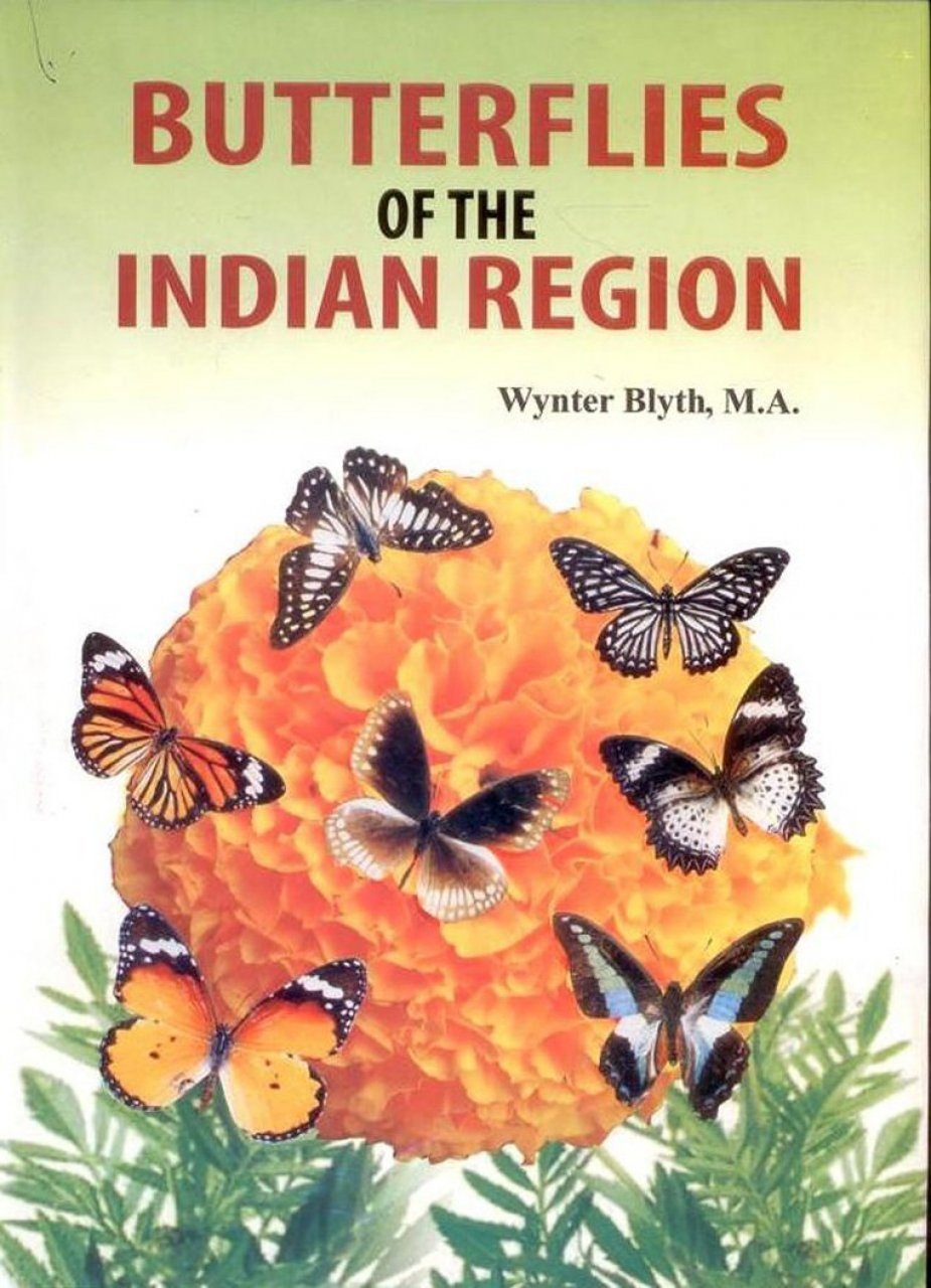 Butterflies of the Indian Region