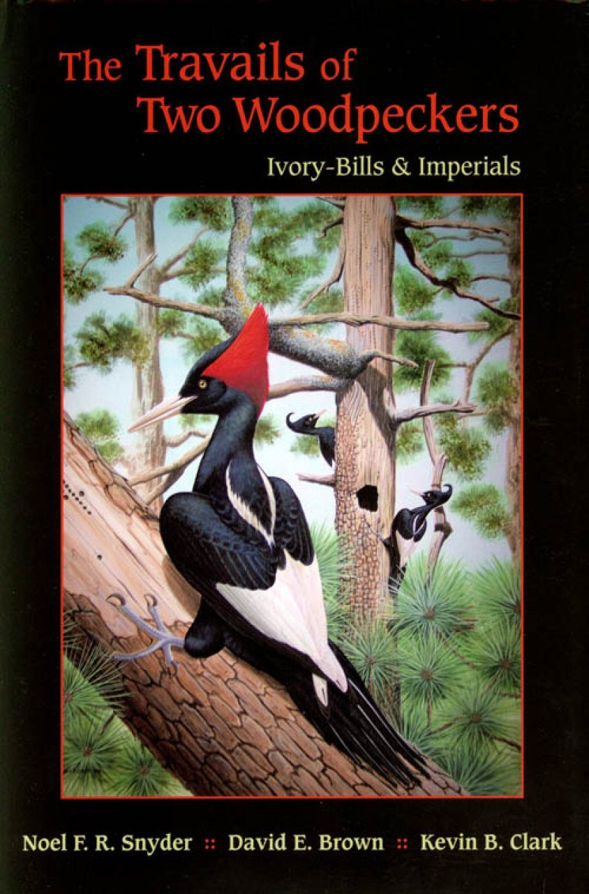The Travails of Two Woodpeckers