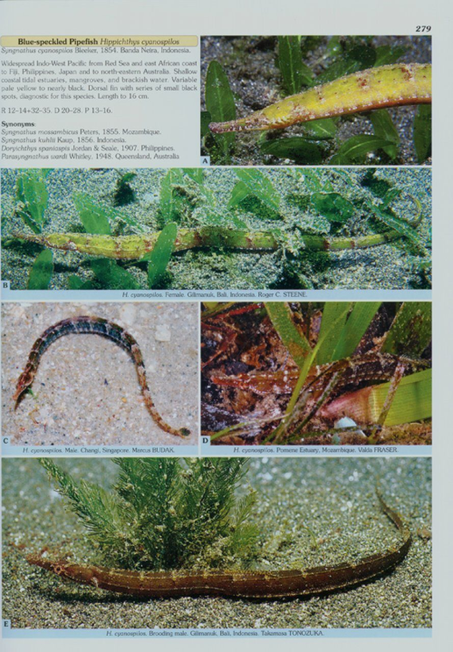Seahorses And Their Relatives Nhbs Academic