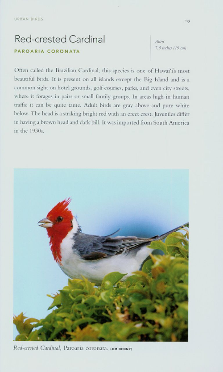 A Photographic Guide to the Birds of Hawai'i: The Main ...