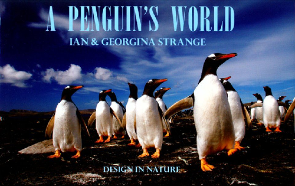 A Penguin's World
