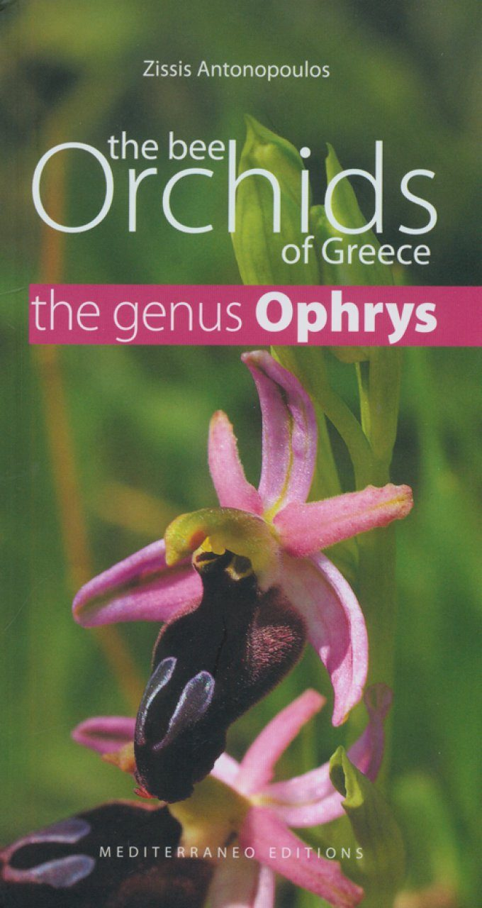 The Bee Orchids of Greece