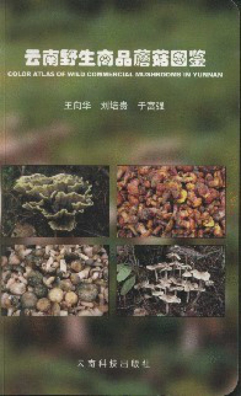 Color Atlas of Wild Commercial Mushrooms in Yunnan [Chinese]