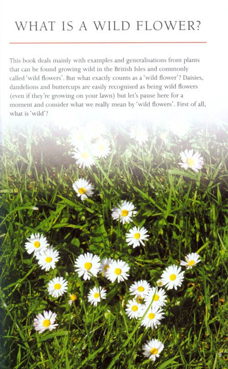 Flowers In The Field How To Find Identify And Enjoy Wild Flowers