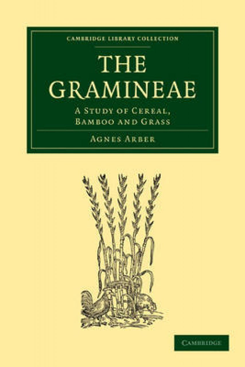 The Gramineae