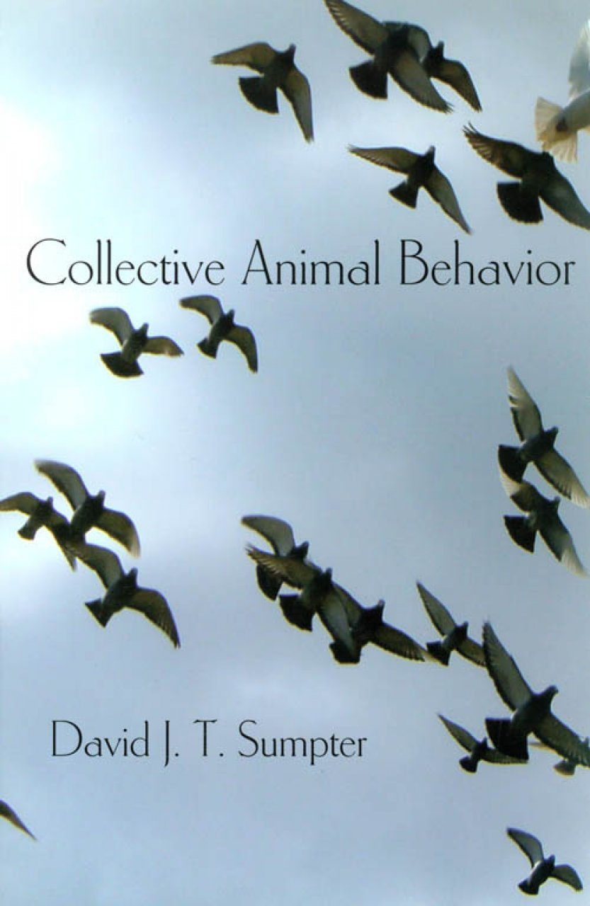 Collective Animal Behavior