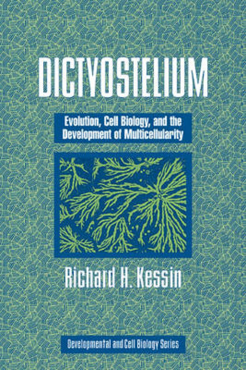 Dictyostelium: Evolution, Cell Biology, and the Development of Multicellularity