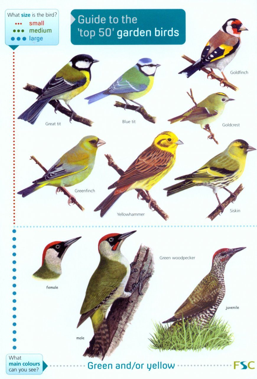Guide to the 'Top 50' Garden Birds