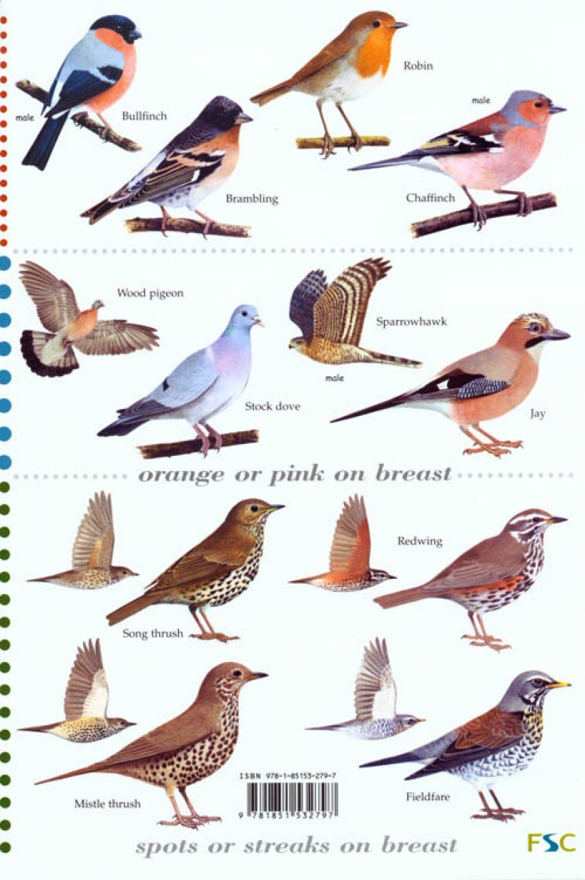 Guide To The Top 50 Garden Birds Nhbs Field Guides