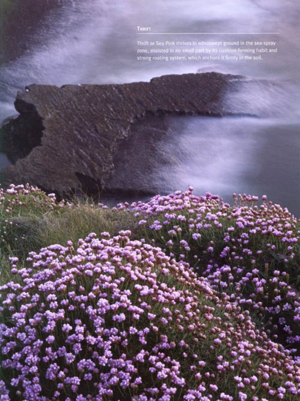 The Wild Flowers Of Ireland The Habitat Guide Doogue Declan