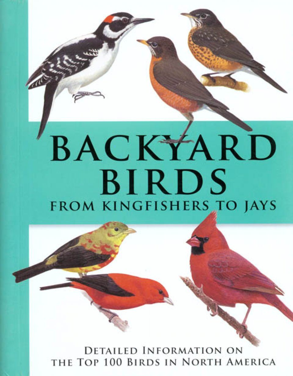 Backyard Birds from Kingfishers to Jays