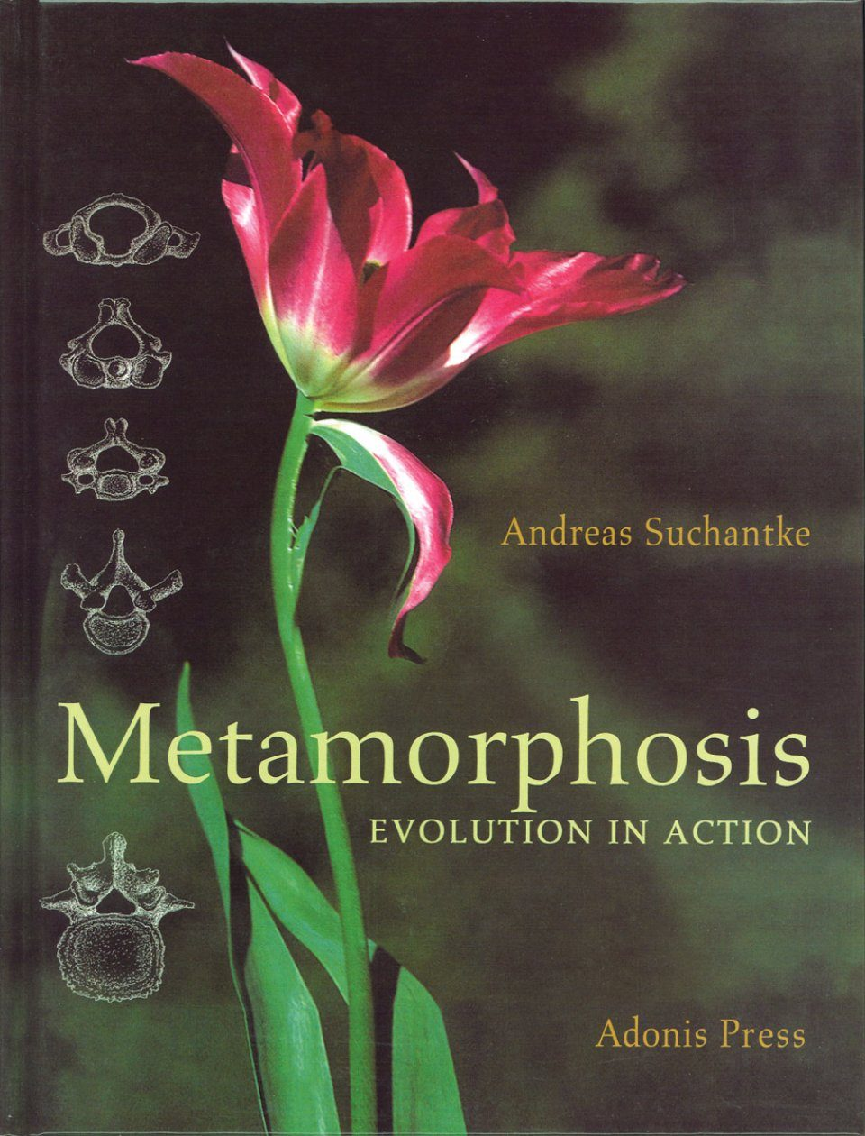Metamorphosis: Evolution in Action