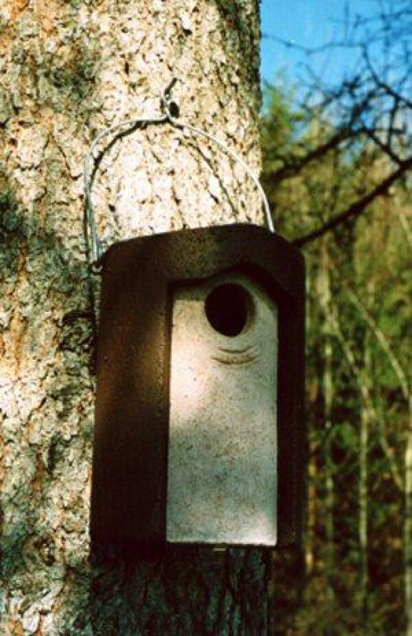 3S Schwegler Starling Nest Box