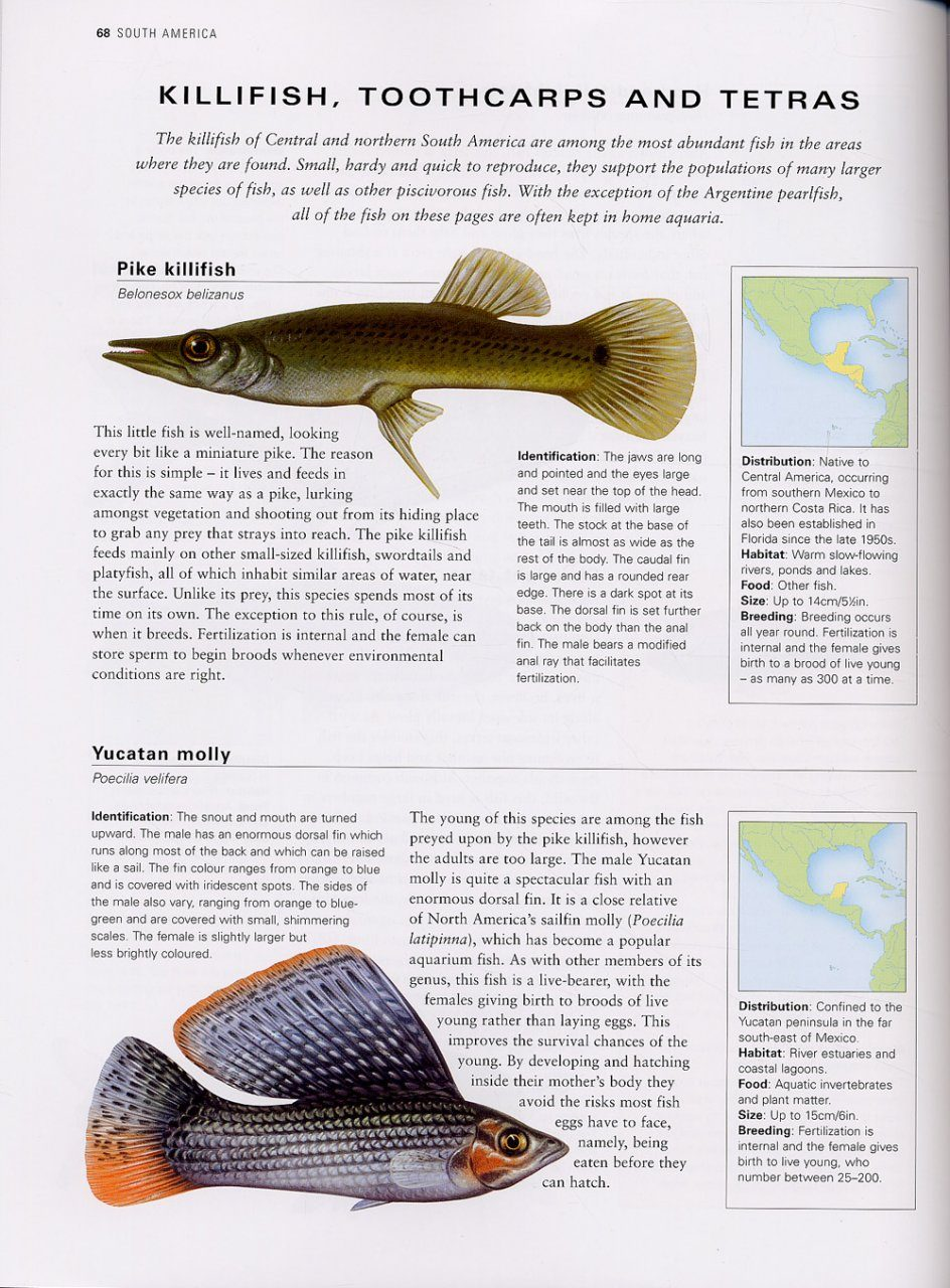The illustrated guide to freshwater fish and river creatures the illustrated guide to freshwater fish and river creatures sciox Images
