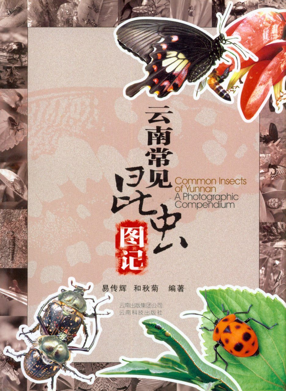 Common Insects of Yunnan: A Photographic Compendium [Chinese]