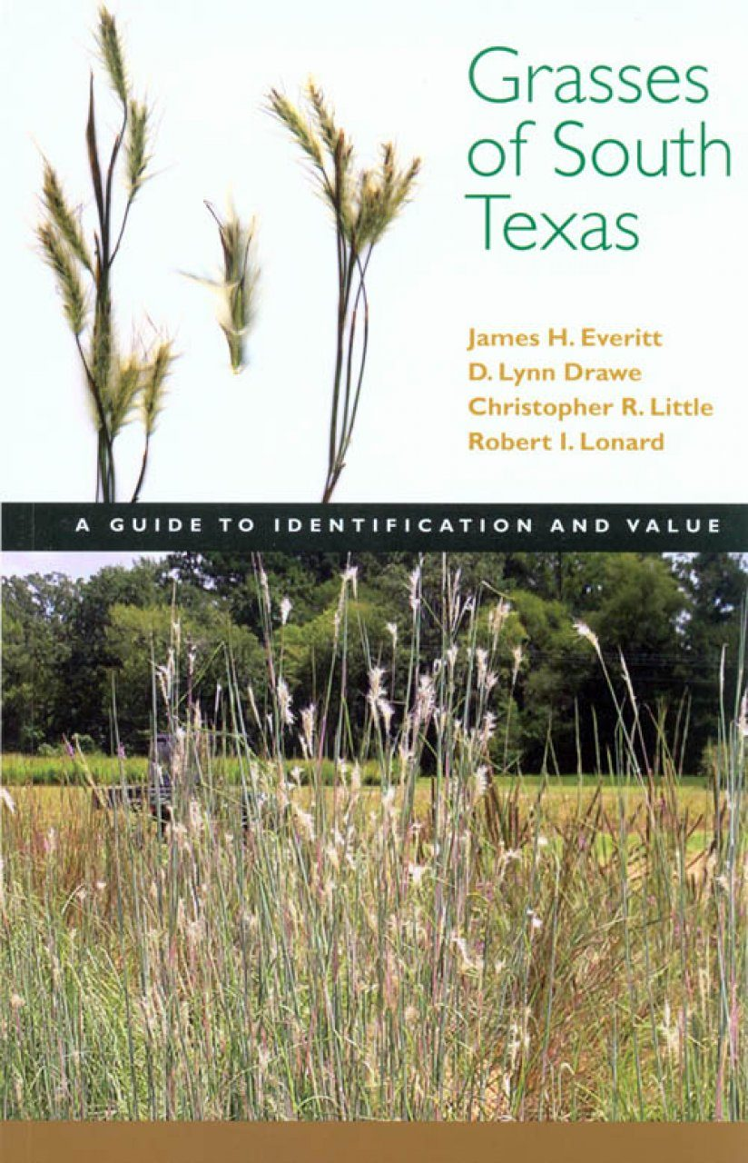 Grasses of South Texas