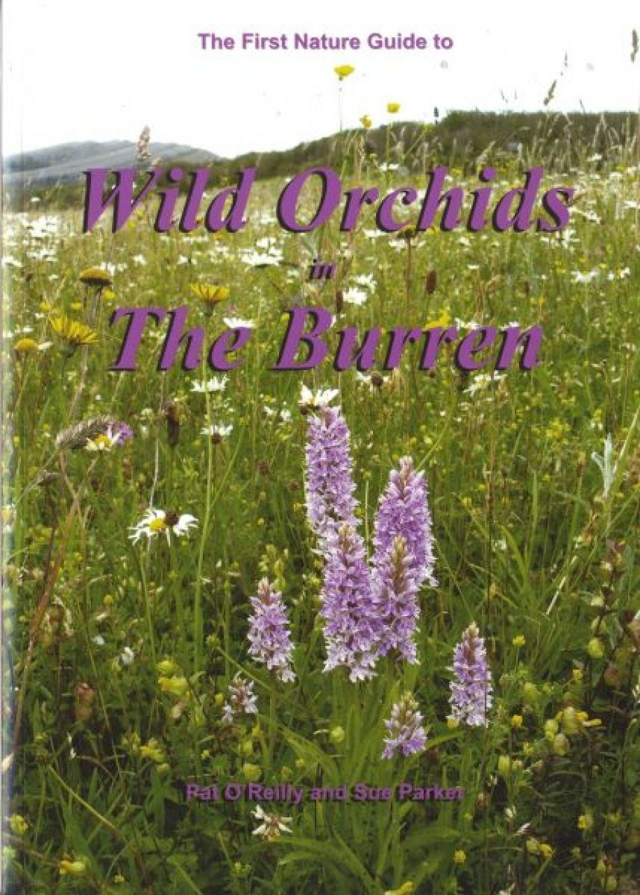 Wild Orchids in the Burren